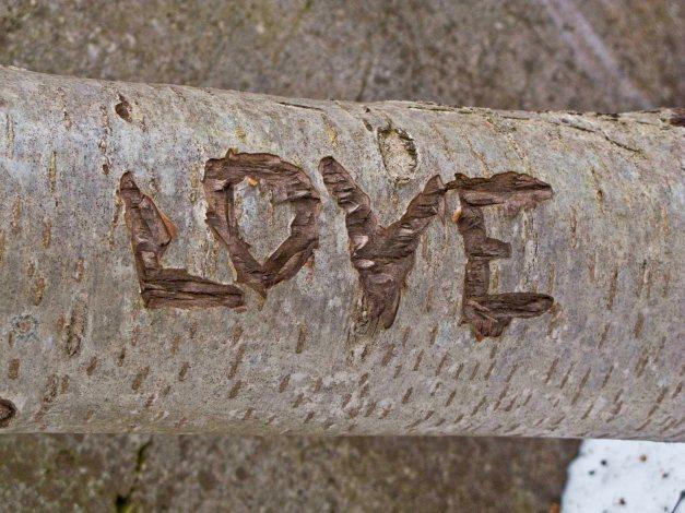 treelove