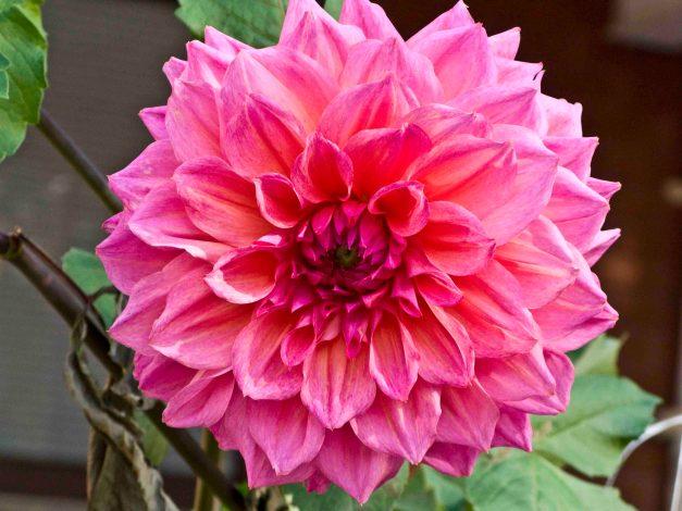 octoberflower