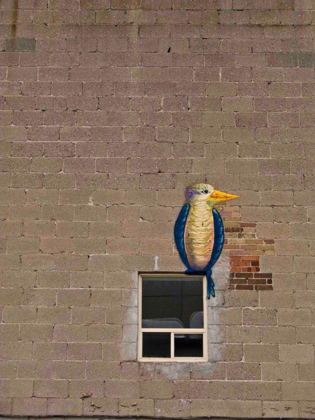 windowbird